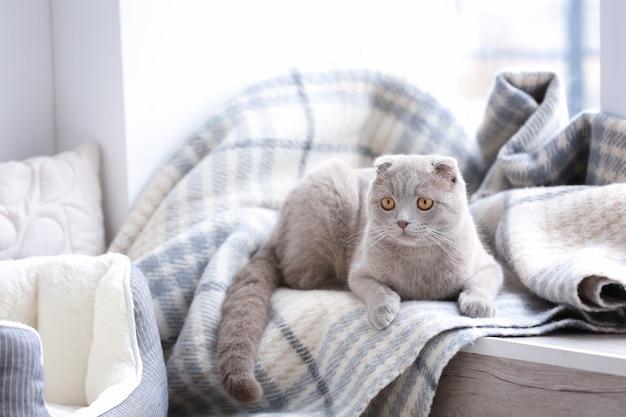 Lindo gato acostado sobre el alféizar de la ventana cubierto con suave plaid