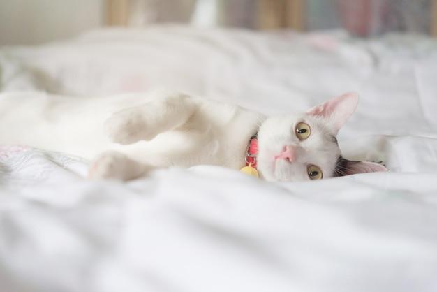 Lindo gato blanco tumbado en la cama. la mascota esponjosa está mirando con curiosidad. gatito callejero duerme en la cama.