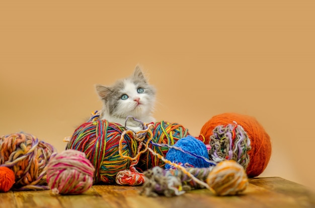 Lindo gato con bolas de hilo de lana de colores