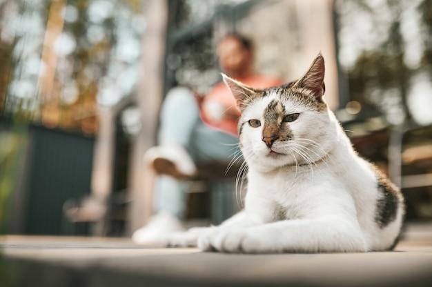 Lindo gato. calma lindo gato mirando a la cámara acostado en el porche y el hombre sentado detrás en el soleado día de otoño
