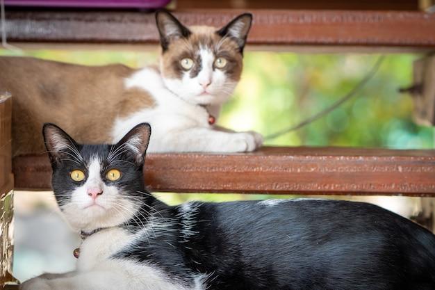 Lindo gato de color blanco y negro acostado en escaleras de madera.