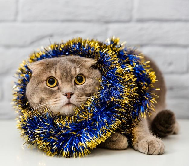 Lindo gato con decoración de árbol de navidad