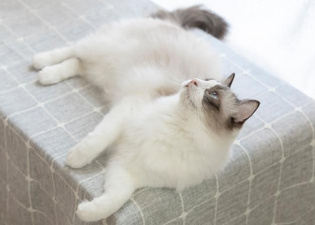 Lindo gato descansando