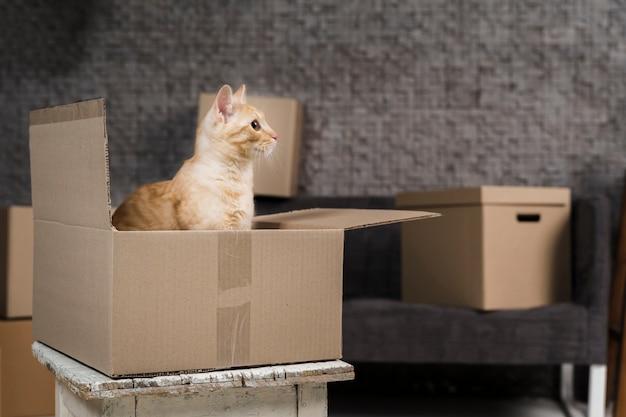 Lindo gato familiar dentro de una caja de cartón