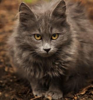 Un lindo gato gris jugando en el patio