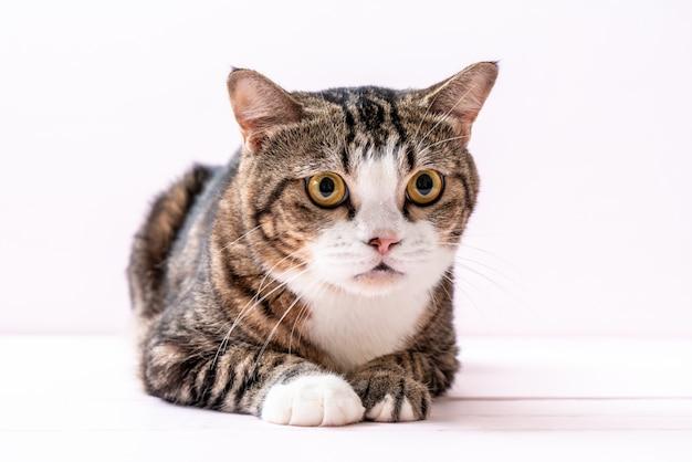 Lindo gato gris