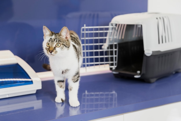 Lindo gato con jaula en clínica veterinaria