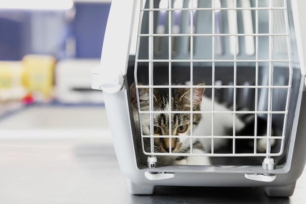 Lindo gato en jaula en clínica veterinaria