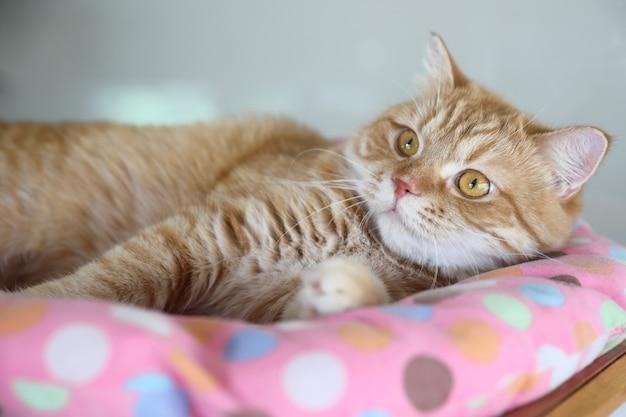 Lindo gato mirando relajado