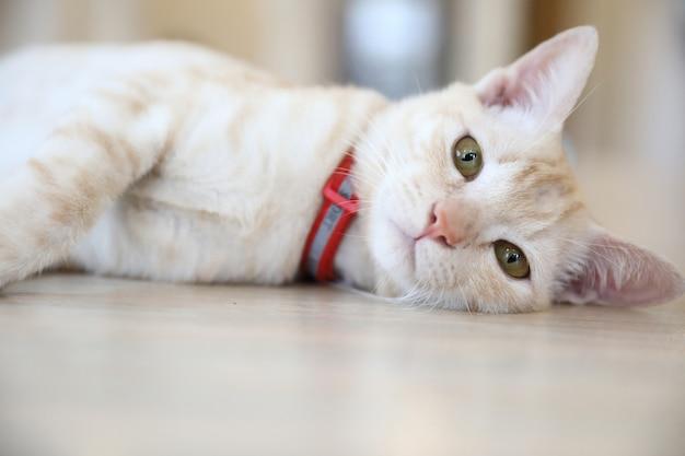 Lindo gato mirando relajarse