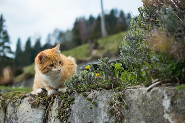 Lindo gato naranja jugando con hierba