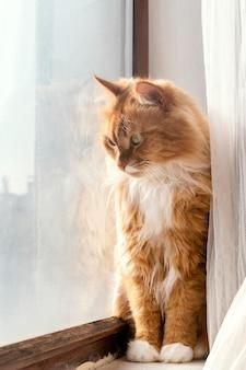 Lindo gato naranja junto a la ventana
