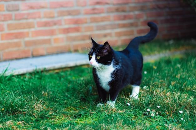 Lindo gato negro en la hierba cerca de la pared de ladrillos rojos