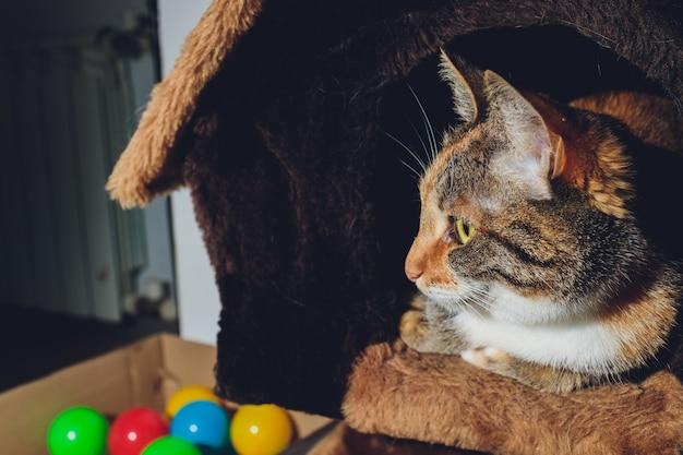 Lindo gato negro y naranja en una casa de mascotas.
