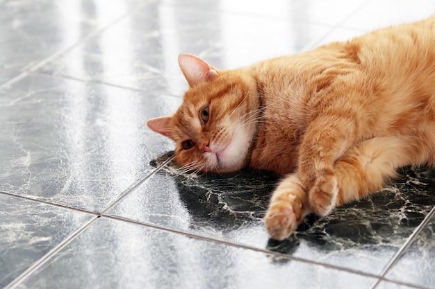 Lindo gato en el piso