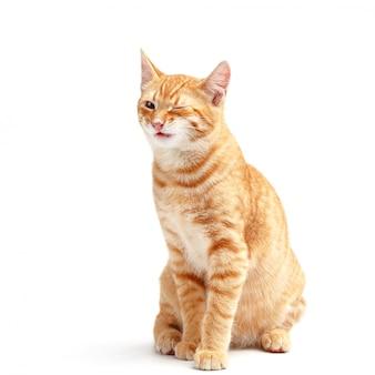 Lindo gato rojo sobre una superficie blanca