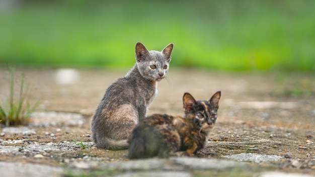 Lindo gato salvaje