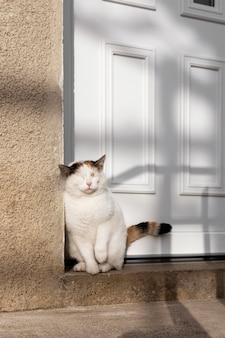 Lindo gato sentado junto a la puerta