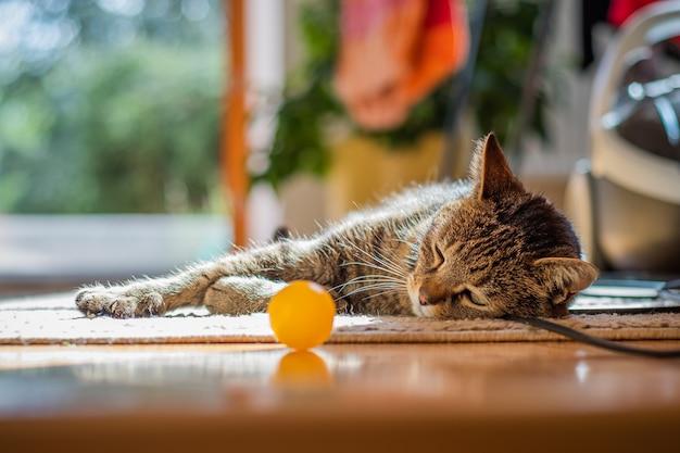 Lindo gato tirado en el suelo en casa