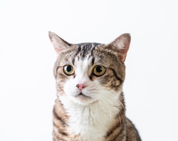 Lindo y gris gato