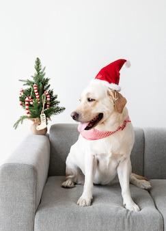 Lindo labrador retriever con un sombrero de navidad
