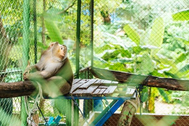 Lindo mono sentado en la jaula