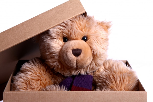Lindo oso de peluche en la caja de regalo