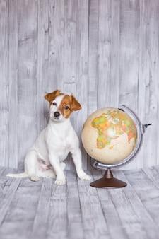 Lindo pequeño perro hermoso sentado con globo terráqueo