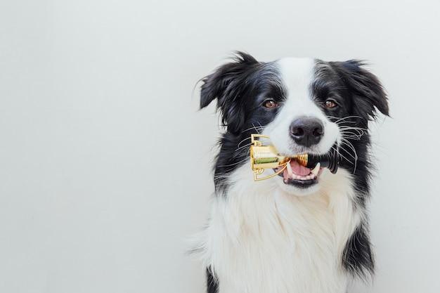 Lindo perrito border collie sosteniendo el trofeo de campeón en miniatura en la boca aislado en blanco