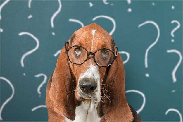 Lindo perrito confundido con signos de interrogación