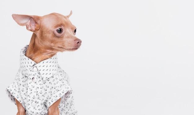 Lindo perrito con disfraz