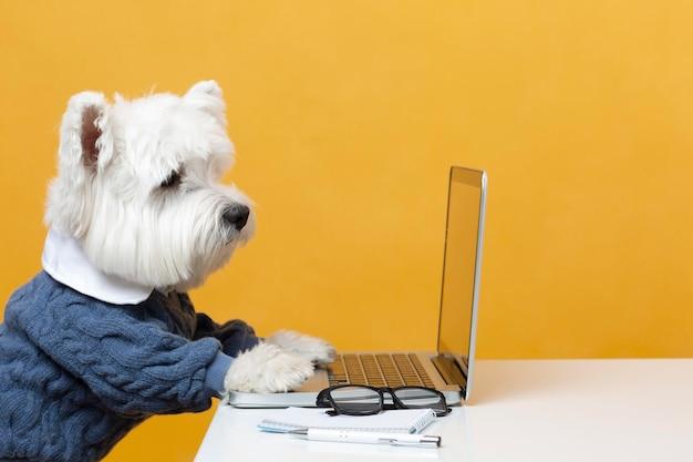 Lindo perrito haciéndose pasar por una persona de negocios