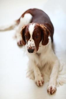 Lindo perrito sentado en el piso blanco