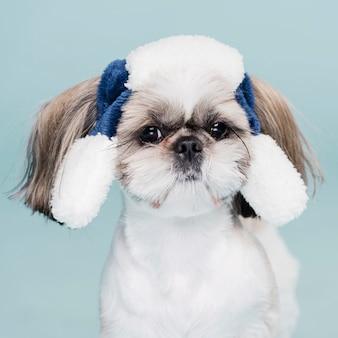 Lindo perrito con sombrero