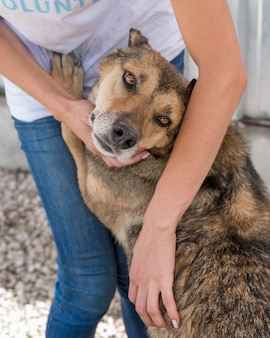 Lindo perro abandonado esperando ser adoptado por alguien