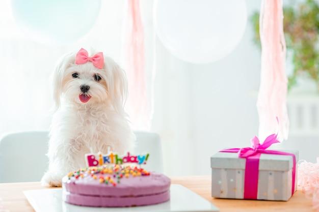 Lindo perro con arco y pastel de cumpleaños