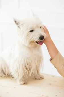 Lindo perro blanco sobre la mesa