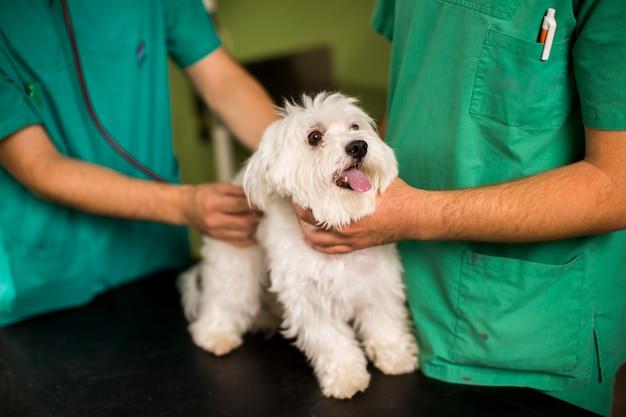 Lindo perro blanco en el veterinario