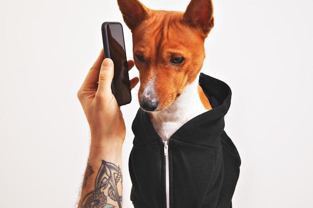Lindo perro con capucha negra escuchando atentamente el teléfono inteligente sostenido por la mano de un hombre tatuado aislado en blanco