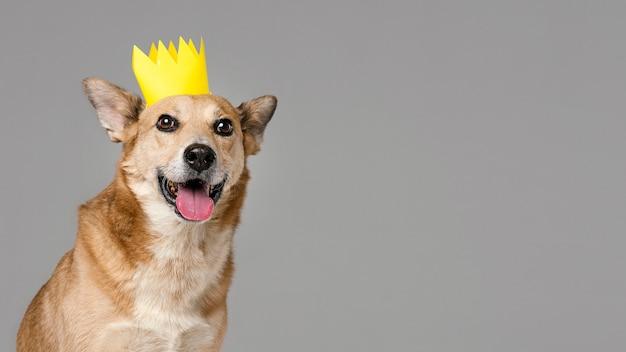 Lindo perro con corona y espacio de copia