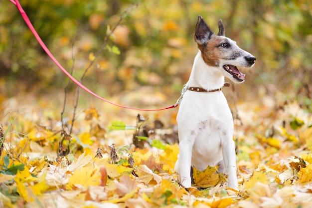 Lindo perro con correa sentado en el bosque