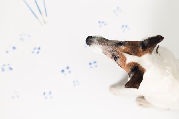Lindo perro dejando marcas de pintura