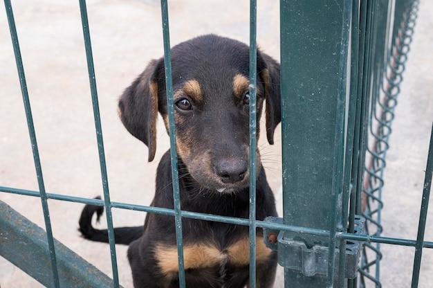 Lindo perro detrás de la valla esperando ser adoptado