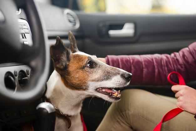 Lindo perro con dueño en auto
