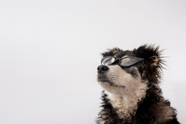 Lindo perro con gafas de sol y espacio de copia