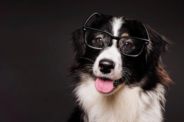 Lindo perro con gafas
