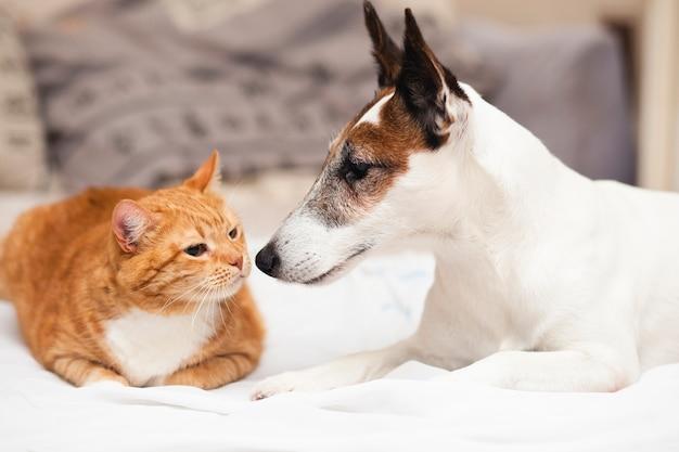 Lindo perro con gato amigo