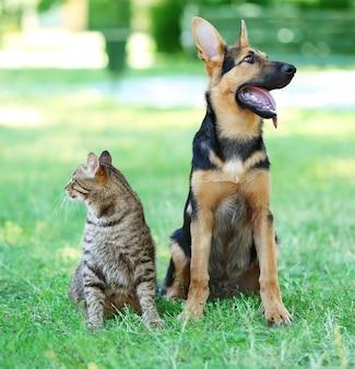 Lindo perro y gato en pasto verde