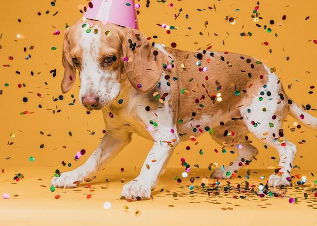 Lindo perro con gorro de fiesta y confeti