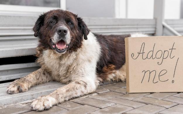 Lindo perro grande sentado junto a adoptarme firmar en el refugio